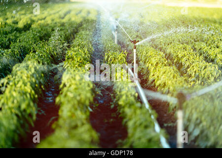 Irrigation system in function watering agricultural plants - Stock Photo