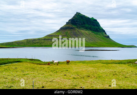 View of mount Kirkjufell with horses grazing in the field near the town of Grundarfjorour, Iceland - Stock Photo