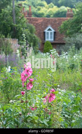 Hollyhocks in a Cottage garden, Hambleden, Buckinghamshire, England - Stock Photo