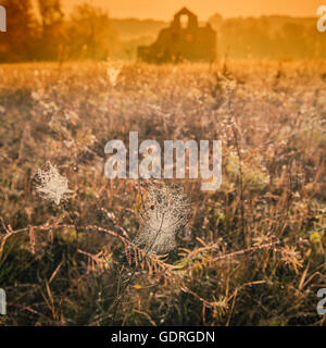 rural landscape and cobwebs on the background of an old abandoned house - Stock Photo