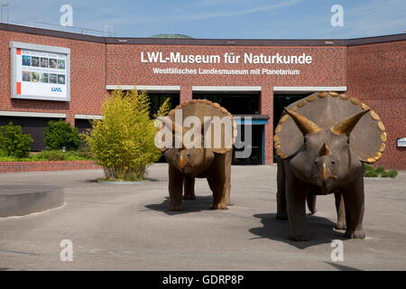 geography / travel, Germany, North Rhine-Westphalia, Muenster, museum of natural history, planetarium, , Additional - Stock Photo