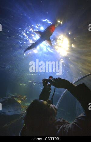 Sea World Aquarium - Stock Photo
