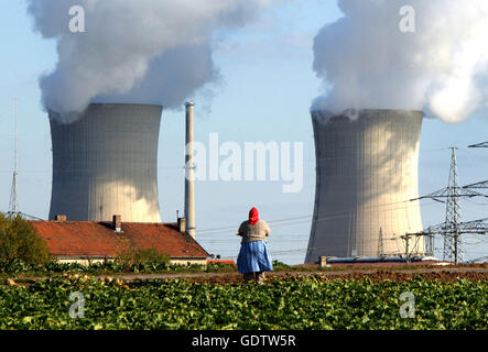 Peasant woman harvesting turnips at Grafenrheinfeld Nuclear Power Plant - Stock Photo