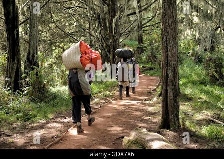 Porters hiking Lemosho trail in the montane rainforest, Mount Kilimanjaro National Park, Tanzania - Stock Photo