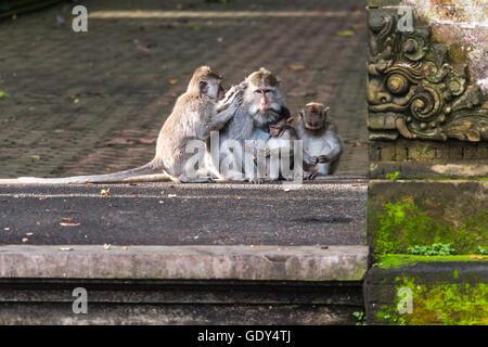 Monkey family on Bali - Stock Photo