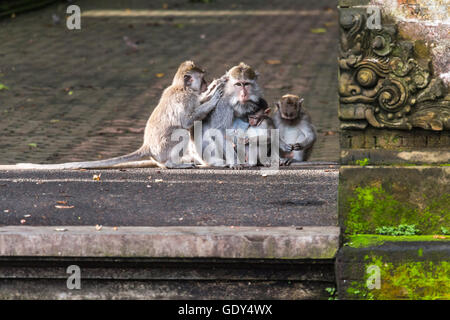Monkey family in monkey forest on Bali - Stock Photo