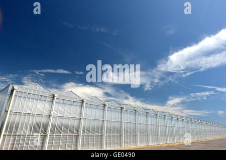 Tangmere nurseries, one of the largest greenhouses in Europe - Stock Photo