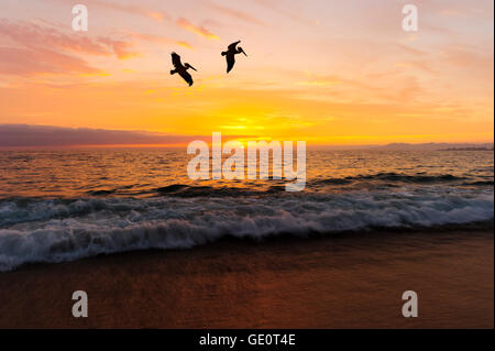 Birds silhouettes is two large seabirds flying agains a vivid and colorful ocean sunset as a gentle wave rolls to - Stock Photo