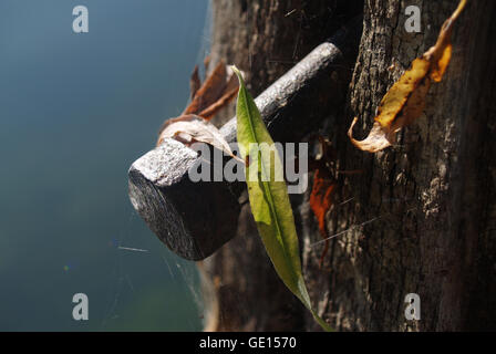 Close-up of an old metal bolt on wooden post. - Stock Photo