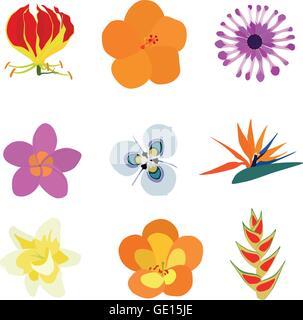 Set of nine exotic flowers containing: Flame Lily, Orange Hibiscus, African Daisy, Plumeria, Moraea villosa, Bird - Stock Photo