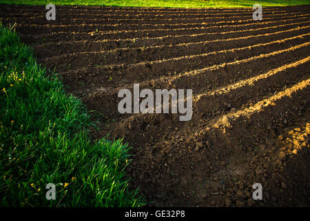 Small field at sunset - Stock Photo