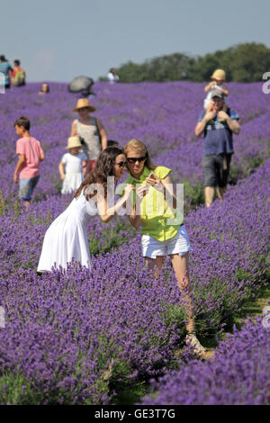 Banstead, Surrey, UK. 23rd July 2016.  Colouful scenes at the lavender fields near Banstead, Surrey, where two girls - Stock Photo