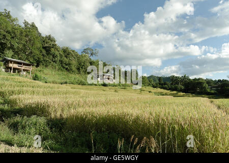 View of rice farm and cloudy blue sky by local people in mountain, northern part of Thailand - Stock Photo