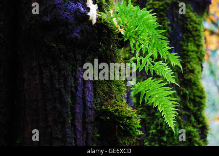 Bright green fern against dark tree trunks and moss - Stock Photo