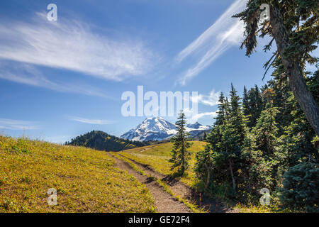 Emerging from  forested trail onto the meadows of Skyline Divide with views toward the glaciated peak of Mount Baker, - Stock Photo