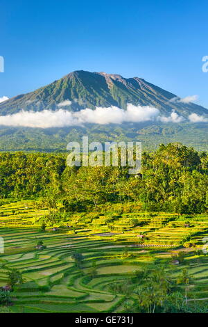 Gunung Agung Volcano and rice terrace landscape, Bali, Indonesia - Stock Photo