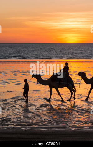 Camels on Cable Beach at sunset, Cable Beach, Broome, Kimberley, Western Australia, Australia - Stock Photo