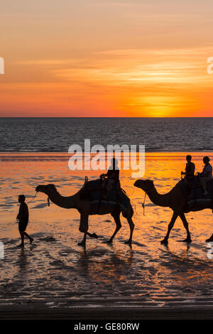 Camels on Cable Beach at sunset, Cable Beach, Broome, Kimberley, Western Australia - Stock Photo