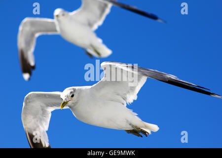 The birds are flying in the blue sky - Stock Photo