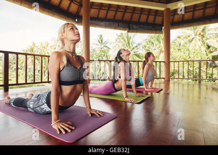 Shot of young women doing cobra pose on exercise mat at yoga class. Three female doing core stretch on fitness mat. - Stock Photo