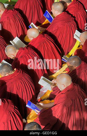 Puja,Monks praying during Losar new year, in Namgyal Monastery,in Tsuglagkhang complex. McLeod Ganj, Dharamsala, - Stock Photo
