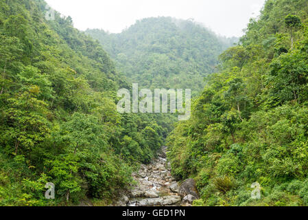 Small river running through a dense pristine forest - Stock Photo