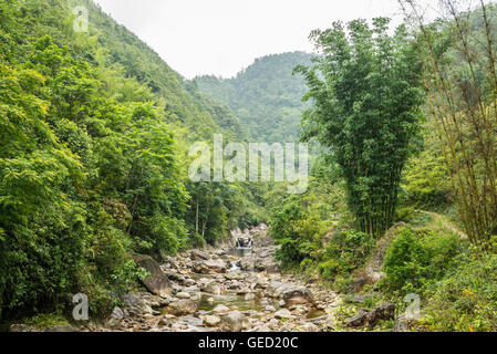 Small river running through a dense pristine jungle forest - Stock Photo