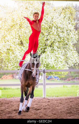 Bavarian Warmblood, Young man vaulting on bay mare. Germany - Stock Photo
