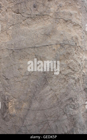 Rough gray rock background texture - Stock Photo