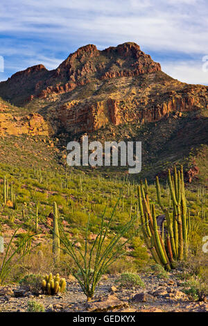 geography / travel, USA, Arizona, Organ Pipe National Monument, Arizona, No-Exclusive-Use - Stock Photo