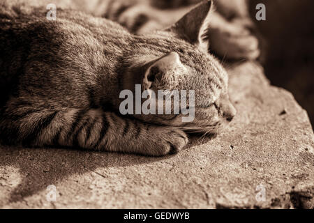 Cat sleeping on the stone, toned black and white - Stock Photo