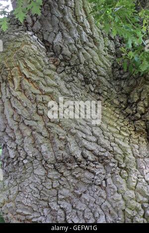 Closeup texture of tree trunk - Stock Photo