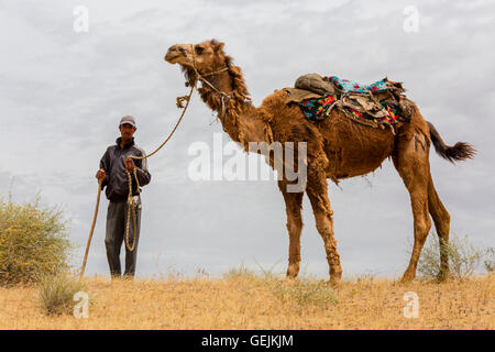 Man holds his camel and looks at me, in the Kyzylkum Desert, in Uzbekistan. - Stock Photo