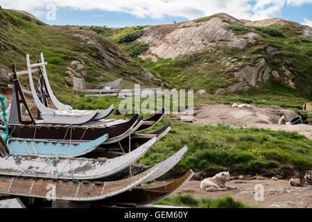Traditional Inuit wooden sledges and Greenland Huskies (Canis lupus familiaris borealis) chained up outside in summer. - Stock Photo