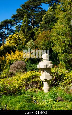 San Francisco Botanical Garden Strybing Arboretum California Wild Stock Photo Royalty Free