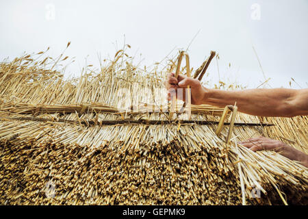 Man thatching a roof, inserting hazel wood spars to fasten the straw. - Stock Photo