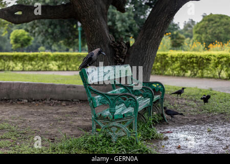 A Crow sits on an empty metal wooden bench on a park after a shower. - Stock Photo