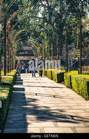 Rose Gardens at The Huntington Library, Art Collections and Botanical Gardens - Stock Photo
