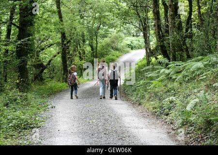 three children walking through woods - Stock Photo