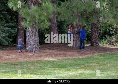 boys and girl, playing, playing, hide-and-seek, Sonoma State University, city, Rohnert Park, Sonoma County, California - Stock Photo