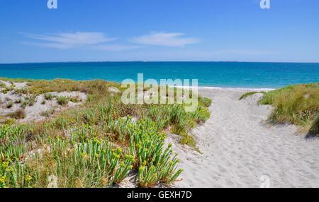 Fraser Island Weed On Beach