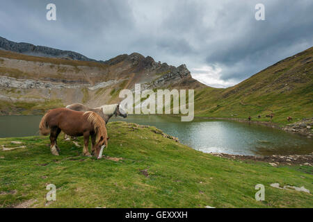 Ponies grazing in the Pyrenees. - Stock Photo