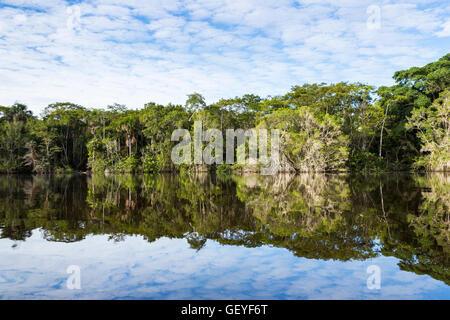 Amazonian tropical rain forest reflected in Garzacocha Logoon at La Selva lodge on the Napo River, Ecuador, South - Stock Photo