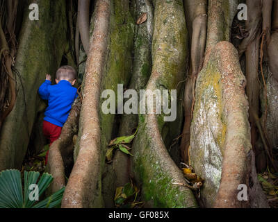 Little boy climbing the giant roots of a fig tree in the José do Canto Botanical Garden in Ponta Delgada, Sao Miguel - Stock Photo