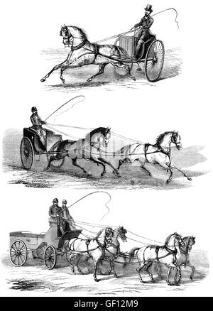 Methods of guiding horses by pulling on its reins - Stock Photo