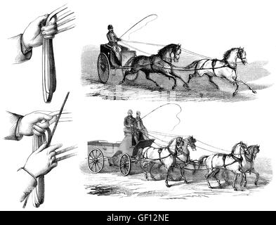 Methods of guiding horses by pulling on its reins, two or four horses driving - Stock Photo