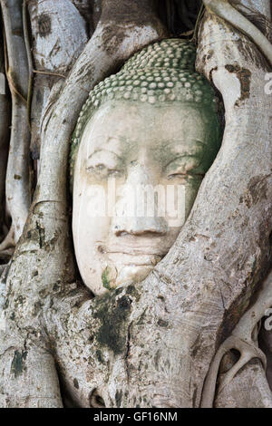 Head of sandstone Buddha in the tree roots. Wat Phra Mahathat, Ayutthaya, Thailand - Stock Photo