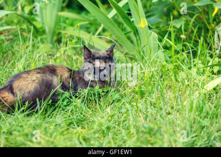 Cat sleeping on the grass in the garden - Stock Photo