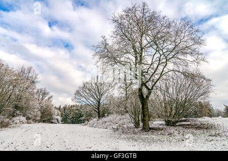 Trees in Winter Countryside After Snowfall - Stock Photo