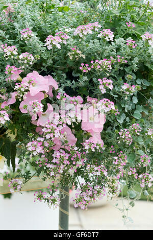 Verbena Aztec Pink Magic and Pink Petunia flowers in a floral stand. UK - Stock Photo